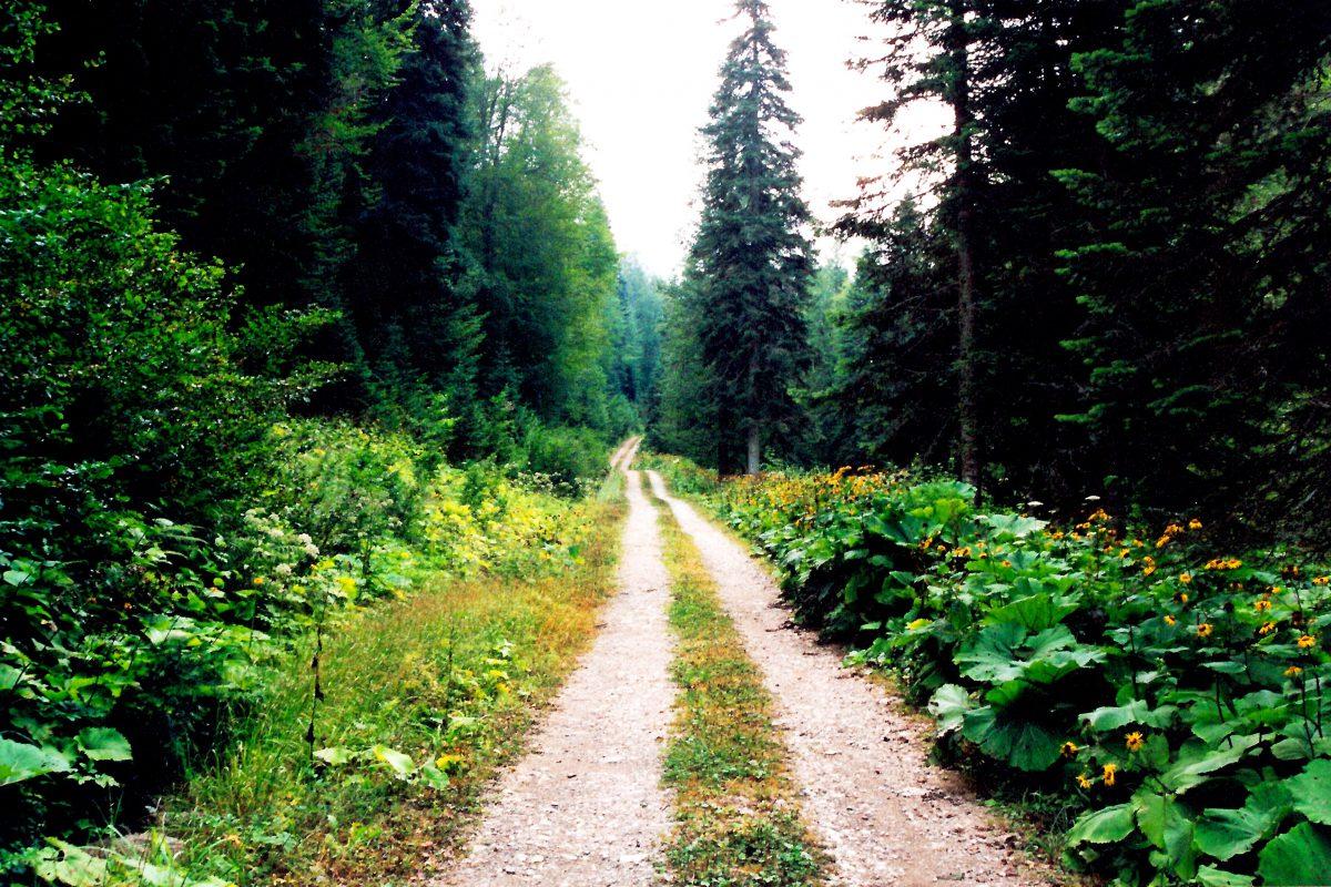 Zümrüt köyünün eski değirmen yolu